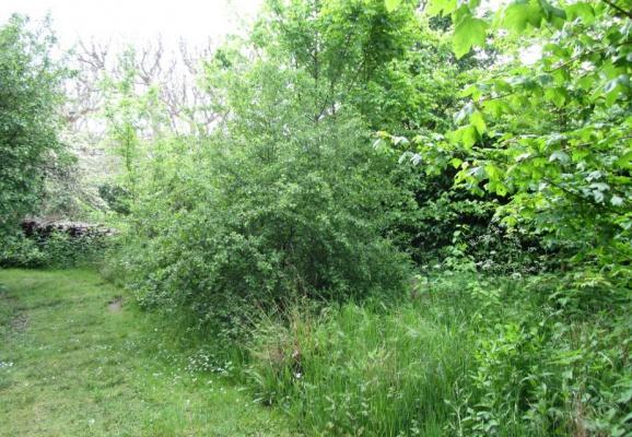 Aménager une haie champêtre chez soi : un atout paysager et environnemental !