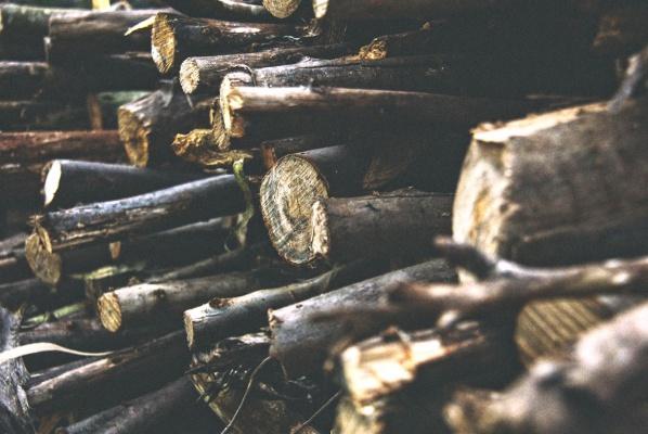 Eloge du tas de bois au jardin